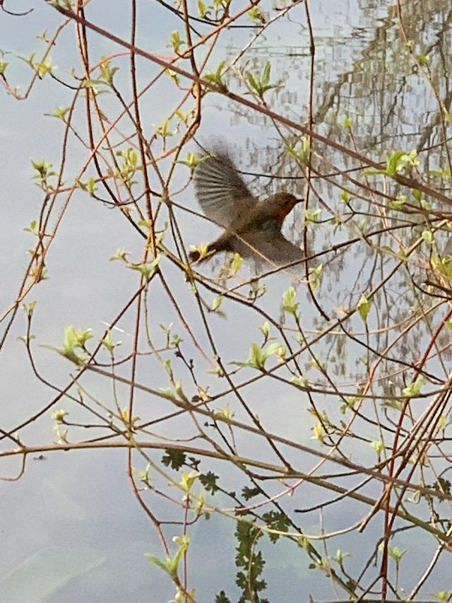 vogelstimmenwanderungen-in-liedberg-4